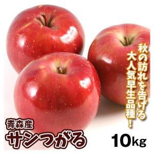 りんご 青森産 ご家庭用 訳あり サンつがる(10kg・24〜56玉)林檎 フルーツ 果物 食品 国華園