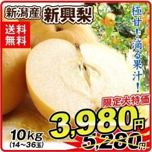 梨 新興梨(10kg)14〜36玉 超特価 産地おまかせ ご家庭用 なし しんこう 和梨 フルーツ 果物 国華園|seikaokoku