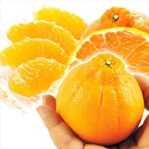 みかん 熊本産 ちびデコ 8kg 1組 送料無料 食品 国華園|seikaokoku
