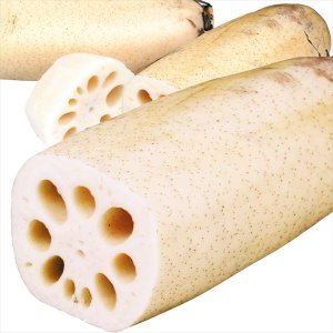 レンコン 熊本産 れんこん 2kg1組 野菜 食品 国華園|seikaokoku