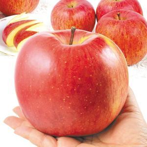 りんご 山形産 大玉ふじ 「でかふじ」 5kg1箱 フルーツ 果物 林檎 国華園 seikaokoku