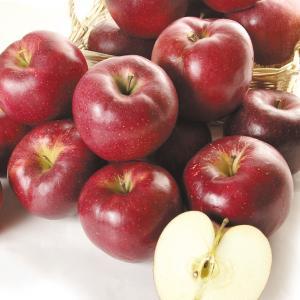 りんご 青森産 大紅栄 5kg1箱 フルーツ 果物 林檎 国華園 seikaokoku