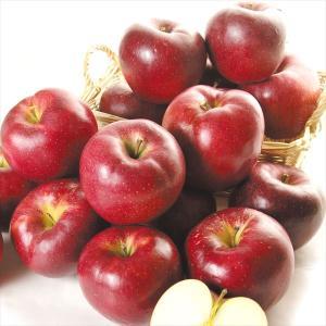 りんご 青森産 大紅栄  10kg1箱 フルーツ 果物 林檎 国華園 seikaokoku