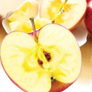 りんご 青森産 蜜入りふじ 5kg1箱 フルーツ 果物 林檎 国華園 seikaokoku