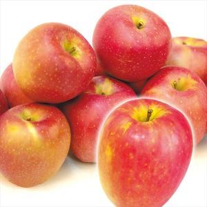 りんご 青森産 印度(いんど) 10kg1箱 フルーツ 果物 林檎 国華園 seikaokoku