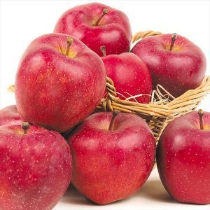 りんご 青森産 スターキング 10kg1箱 フルーツ 果物 林檎 国華園 seikaokoku