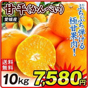 みかん 愛媛産 甘平 10kg 1組 送料無料 食品 国華園|seikaokoku