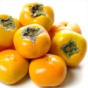 柿 和歌山産 ひらたね柿 【干柿用渋柿】 約7.5kg1組 フルーツ 果物 国華園|seikaokoku