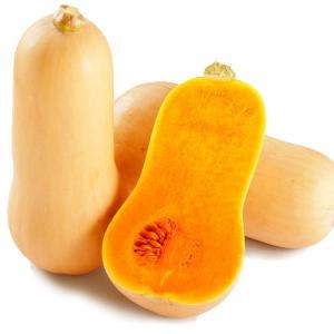 カボチャ 京都産 バターナッツかぼちゃ 約10kg1箱 野菜 国華園|seikaokoku