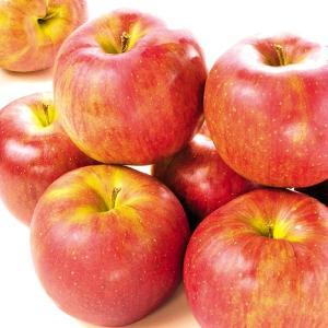 りんご 青森産 大特価 シナノスイート(10kg)28〜56玉 ご家庭用 林檎 フルーツ 国華園|seikaokoku