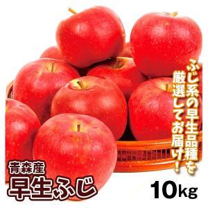 りんご 大特価 青森産 早生ふじ(10kg)24〜50玉 ご家庭用 数量限定 フルーツ 果物 林檎 国華園|seikaokoku