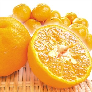 みかん 九州産 ご家庭用 ポンカン 5kg 1組 送料無料 食品 国華園|seikaokoku