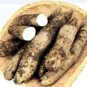 長いも 青森産 ご家庭用 土つき長いも 2.5kg1組(500g×5袋) 野菜 国華園|seikaokoku