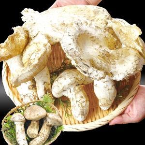 松茸 大特価 北米産(約200g)ご家庭用 冷蔵便 まつたけ 秋の味覚 野菜 食品 グルメ 国華園|seikaokoku