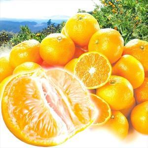 みかん 熊本産 熊本みかん(10kg)ご家庭用 大特価 2S〜2L サイズ指定不可 蜜柑 柑橘 フルーツ 果物 食品 国華園