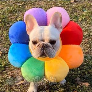 2色 エリザベスカラー ソフト 犬 猫 ペット グッズ 軽量 柔らかい 術後 用品 ねこ いぬ 用品 かわいい 傷舐め防止 引っ掻き防止 傷口保護 手術後のケア 可愛い seiu