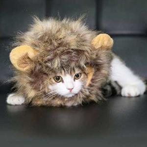 ハロウィン コスチューム 猫・子犬用 ライオンのたてがみ ド...