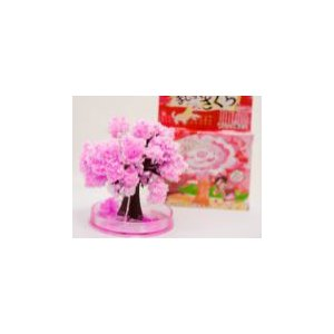 自分で育てて桜満開。マジック桜ミニ 3個セット|self-shop