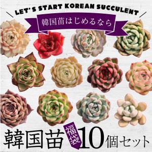 多肉植物 韓国苗10個セット 届いてからのお楽しみ韓国苗福袋 ※種類は選べません