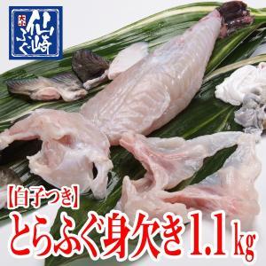 白子付きとらふぐ身欠き(みがき)1.1kgサイズ【山口県産仙崎ふぐ】|sennzaki-fugu-daiko