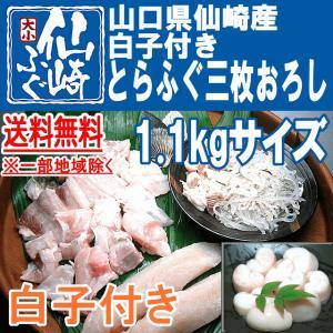 白子付きとらふぐ三枚おろし1.1kgサイズ|sennzaki-fugu-daiko