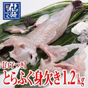 白子付きとらふぐ身欠き(みがき)1.2kgサイズ【山口県産仙崎ふぐ】|sennzaki-fugu-daiko