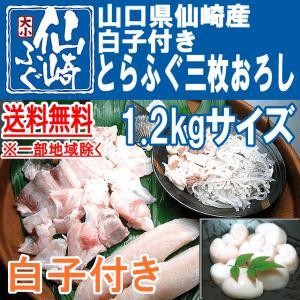 白子付きとらふぐ三枚おろし1.2kgサイズ|sennzaki-fugu-daiko