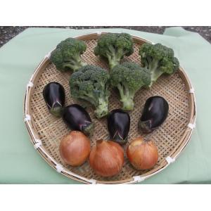送料無料 ブロッコリー 3個と 店長おまかせの安全新鮮無農薬野菜の詰合せ。