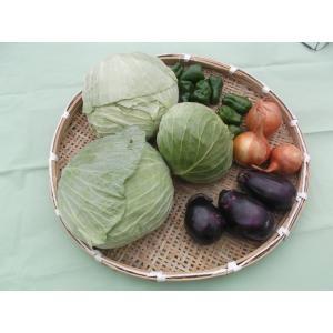 送料無料 キャベツ 2個と 店長おまかせの安全新鮮野菜の詰合せ。