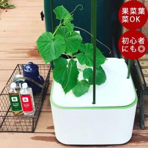イエナは2種類のプレート付きで、実ものも葉ものも作れる水耕栽培キットです。その洗練されたデザインでグ...