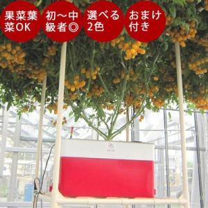 水耕栽培 キット【ホームハイポニカ Sarah+(サラプラス)】 今なら「ネネの種12粒入り」&「種まきスプーン」をセットでプレゼント♪