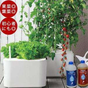 【トマトの種&おまけ付 】ホームハイポニカ MASUCO (マスコ) 葉菜・果菜両用 家庭菜園 キット 水耕栽培 おしゃれな水耕栽培 肥料|sessuimura