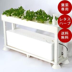 ホームハイポニカ PLAABO(プラーボ) 水耕栽培キット かわいい 葉菜 菜園|sessuimura