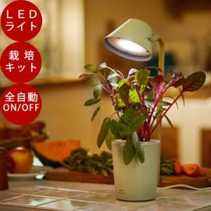 たね付き!ポイント10倍!【水耕栽培】ブルーノ LED 栽培キット STAND BY GREEN かわいい おしゃれ LEDライト 栽培キット 栽培用ライト 室内 セット|sessuimura