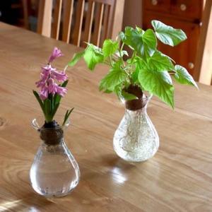 水栽培 フラワーポット ヒヤシンス ガラス製 フラワーベース シンプル 花瓶 球根 アクシス プレゼント ギフト