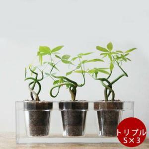 Boskke/ボスケ ボスケキューブ トリプル(S×3) インドアグリーン おしゃれ シンプル 簡単...