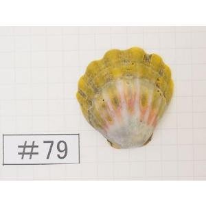 <サンライズシェルとは> ハワイのノースショア周辺などで見つかる二枚貝。 その美しさからアクセサリー...