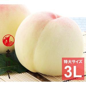 水蜜桃 ≪特大3Lサイズ≫ 岡山 白桃 大玉 お中元 ギフト お供 お取り寄せ(5玉)|shihoya