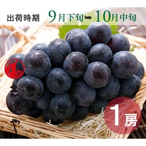 ピオーネ(9月下旬〜10月中旬)500g|shihoya