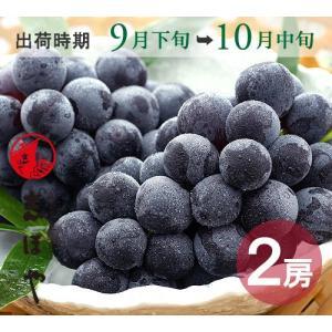 ピオーネ(9月下旬〜10月中旬)1kg|shihoya
