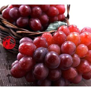 紫苑(しえん)【お歳暮ギフト】約750g×2房|shihoya