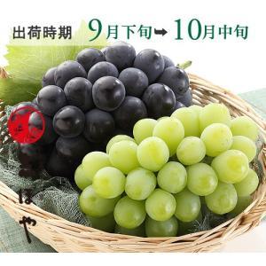 マスカット・ピオーネ(9月下旬〜10月中旬)(1kg)詰合せ|shihoya