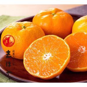 ハウスみかん【お中元ギフト】約1.5kg(L12玉) shihoya