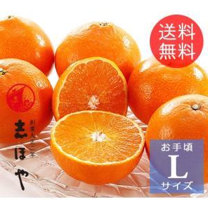 紅マドンナ(紅まどんな)Lサイズ【お歳暮ギフト】【クリスマス】1.2kg(6玉位)|shihoya