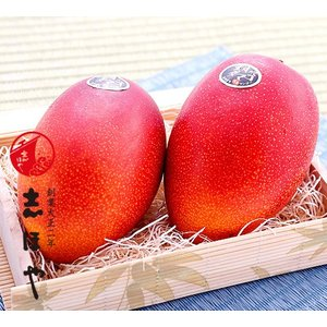 完熟マンゴー(太陽のタマゴ)2Lサイズ2玉|shihoya