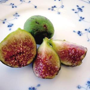 【果樹苗】イチジク「グリス・ドゥ・セントジーン」(12cmp)|shikoku-garden