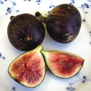 【果樹苗】イチジク「ビオレット・ドゥ・ソリエ」(12cmp)|shikoku-garden