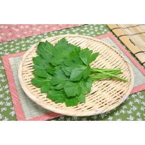 【山菜苗】アシタバ(4株)|shikoku-garden