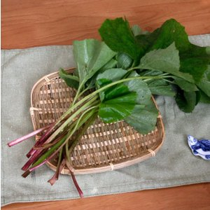 【山菜苗】ヤマブキ(4株)|shikoku-garden