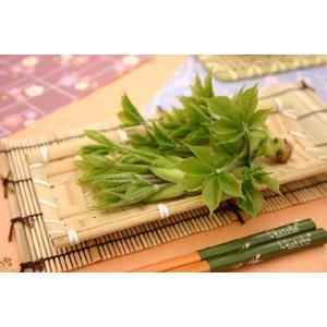 【山菜苗】コシアブラ(2株)|shikoku-garden